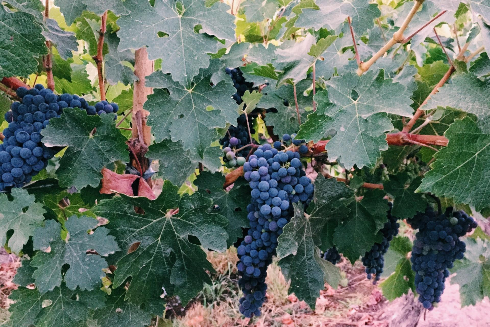 vinícolas no chile